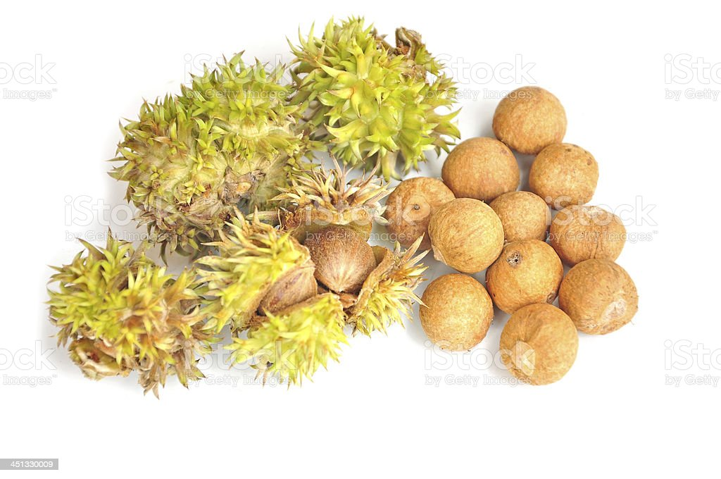 Thai Chestnuts stock photo