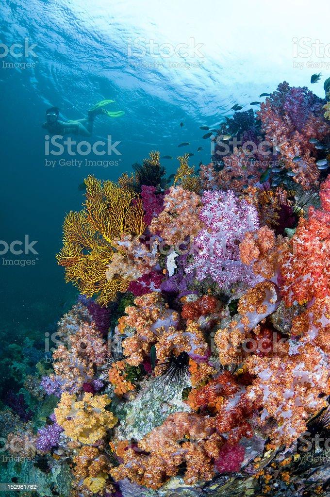 Thai coral reef stock photo