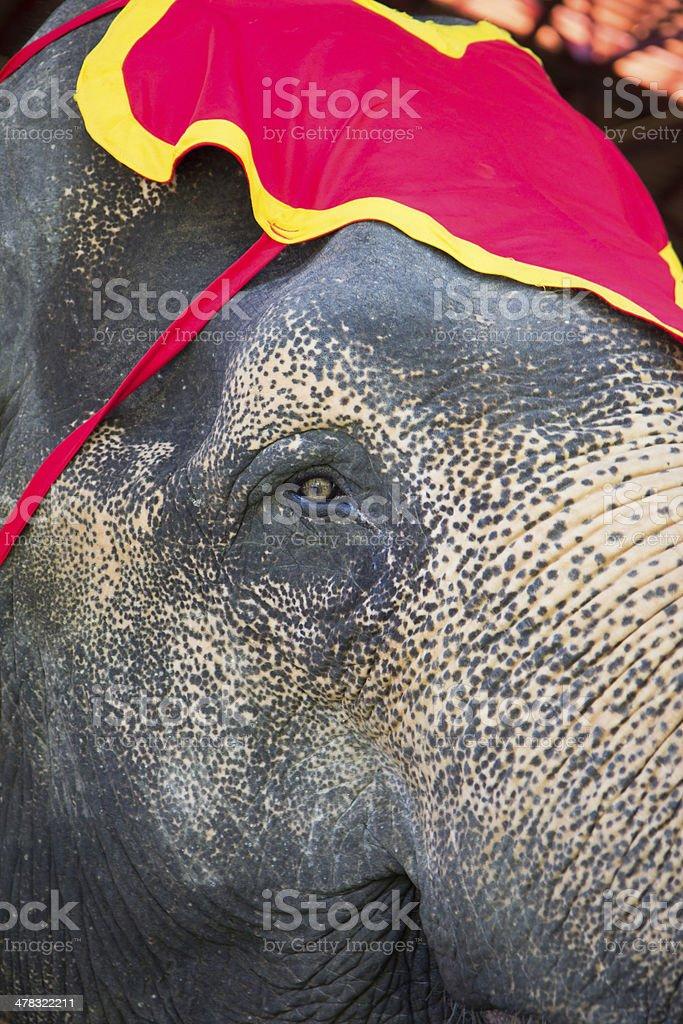thai elephant royalty-free stock photo