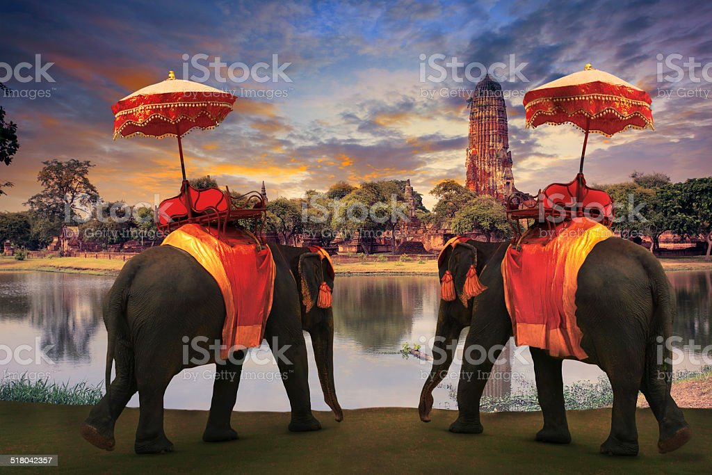 thai elephant standing in  ayuthaya world heritage site stock photo