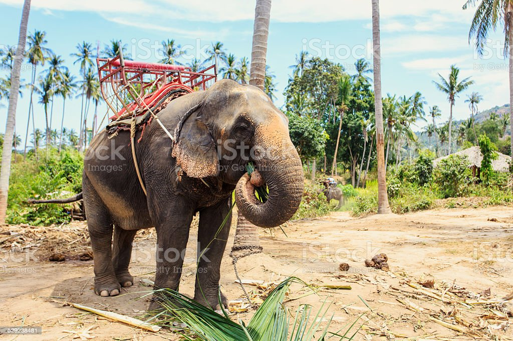 Thai Elephant with bench for trekking stock photo