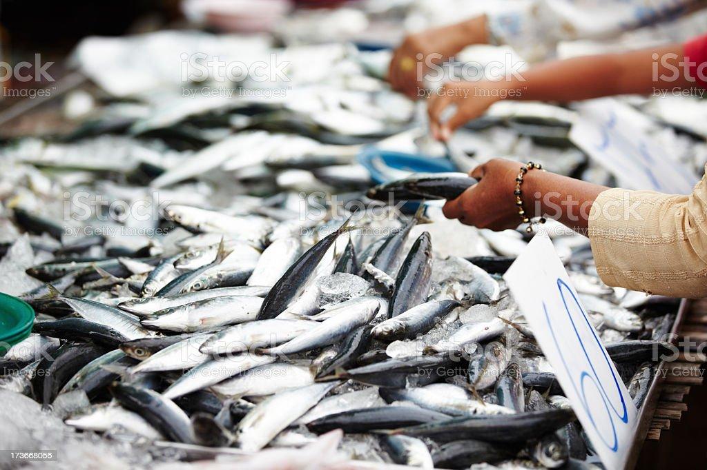 Thai fish market royalty-free stock photo
