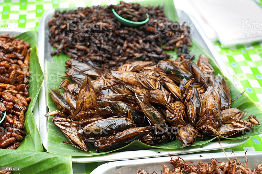 Thai food at market. Fried insects grasshopper for snack stock photo