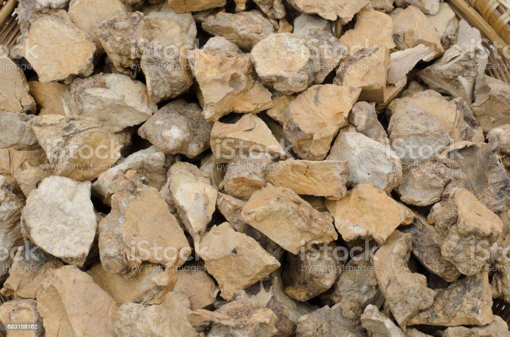 泰國草藥科學名稱土茯苓茯苓 免版稅 stock photo