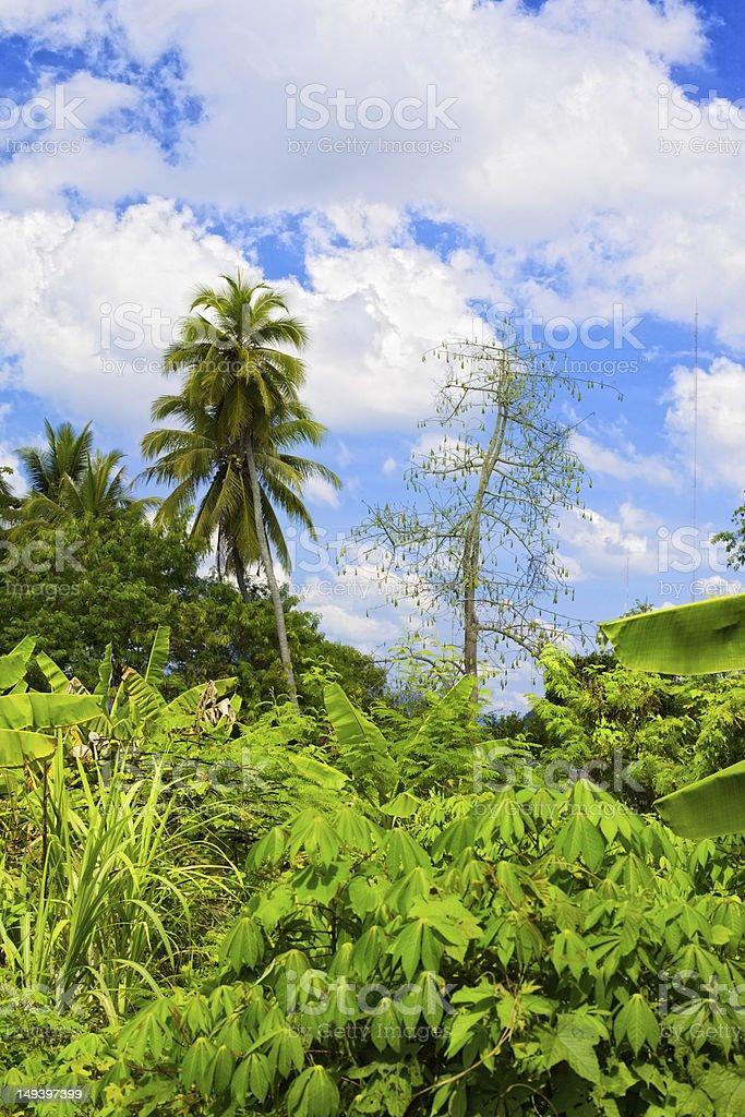 Thai Jungle royalty-free stock photo
