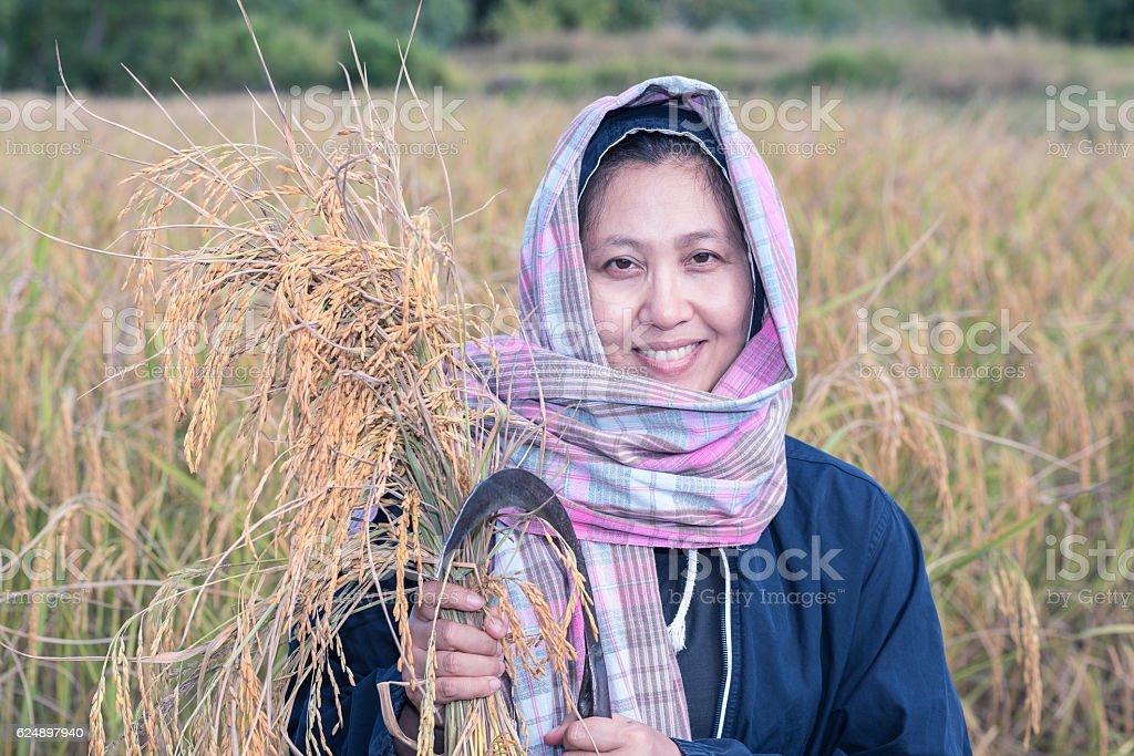 Thai lady farmer in the organic paddy field. stock photo