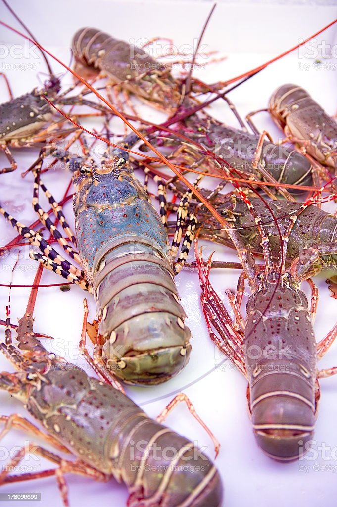 thai lobster, seafood, market, thailand royalty-free stock photo