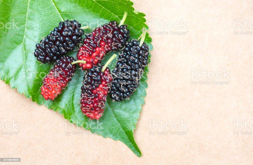 Thai Mulberry Fruit in my farm,Thailand stock photo