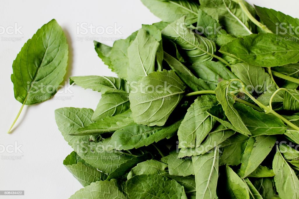 Thai spicy red basil stock photo