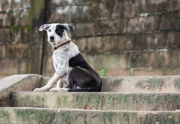 thai street dog liegen zement treppe - hund unter treppe stock-fotos und bilder