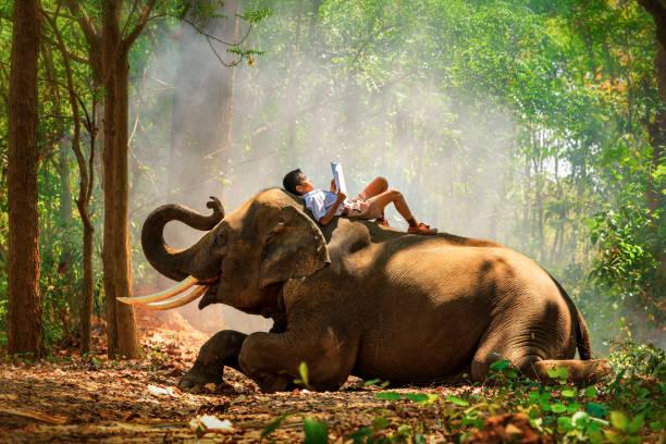 Thai students read books on the back of elephants boy read a book and picture id1163766385?b=1&k=6&m=1163766385&s=612x612&w=0&h=arpbyvhn  muuyvsu79tmpj paas8jpgytjeinqjtiy=