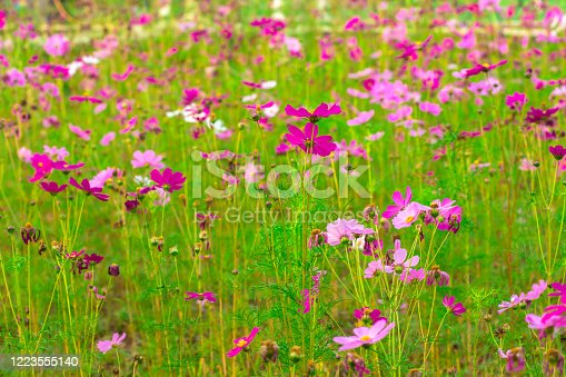istock Thailand, Agricultural Field, Autumn, Awe, Backgrounds 1223555140