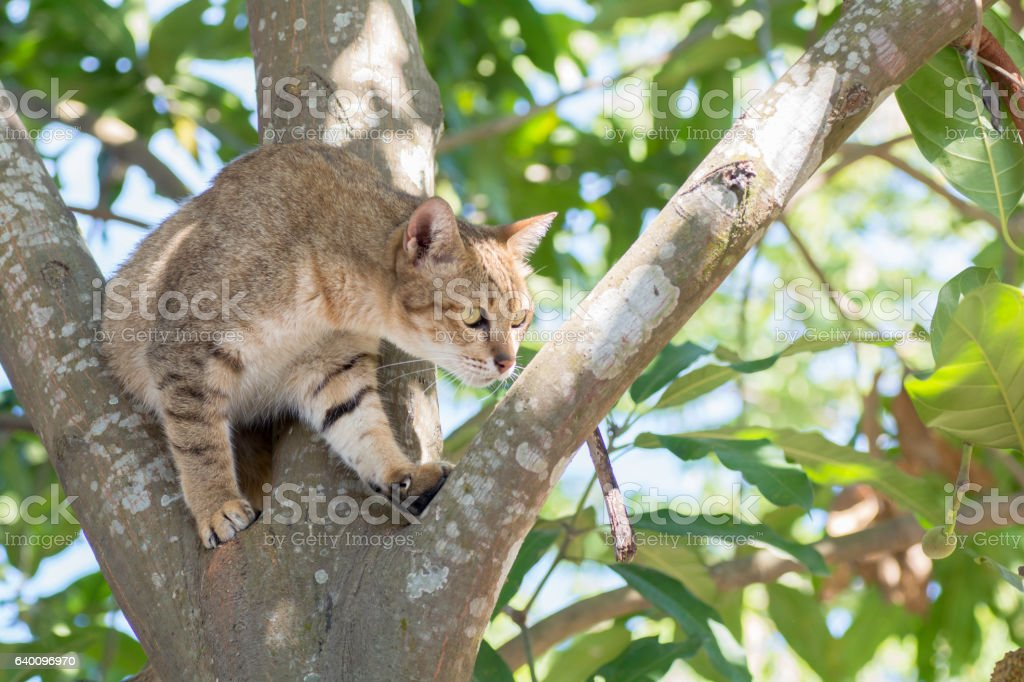 Thailand cat climbing on trees . stock photo