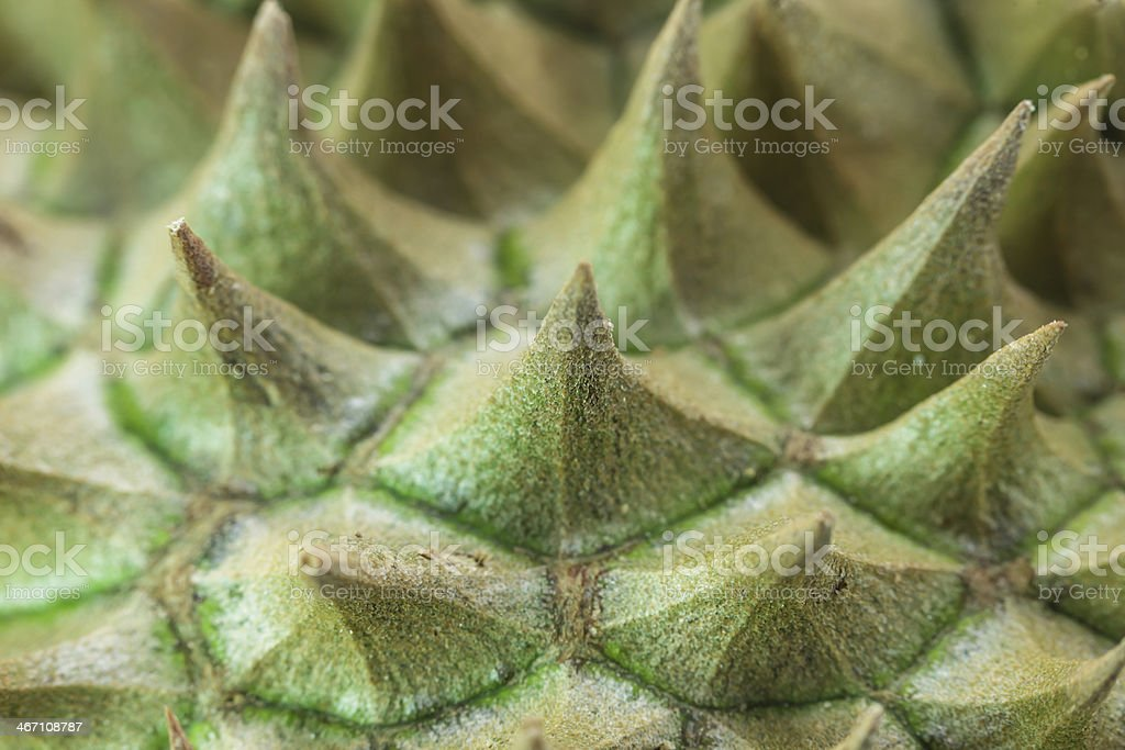Thailand durian fruit royalty-free stock photo