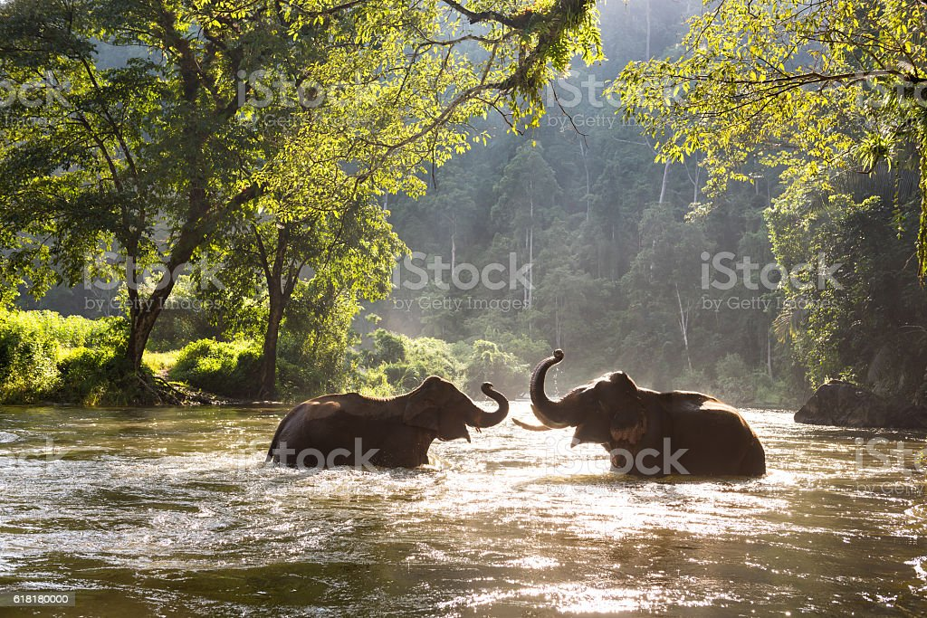 Thailand elephant in the river stock photo