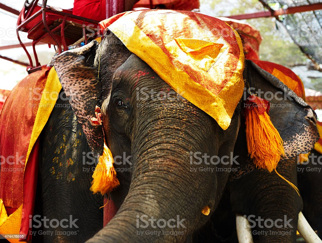 Thailand elephant stock photo