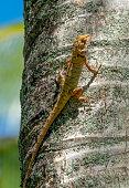 Thailand lizard on a tree trunk.