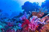 istock Thailand's top dive destination Andaman sea 1286335405