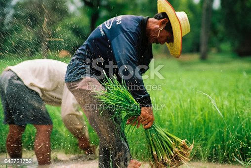 istock Thailand's traditional rice farmer. Thailand's Sisaket province in October 29,2005. 642721752