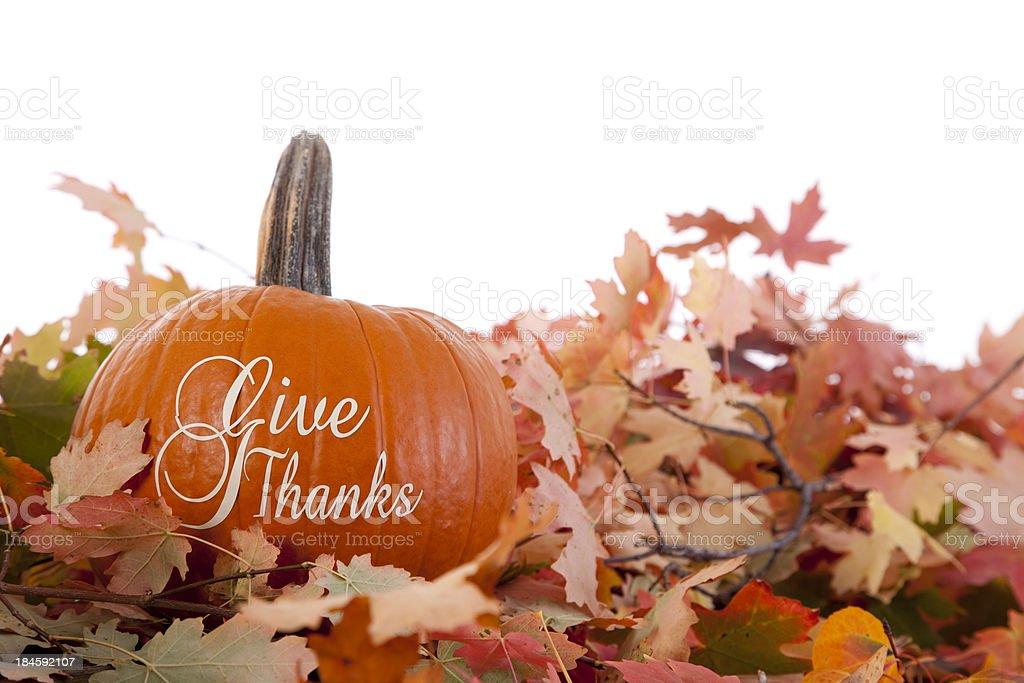 Thank You - Thanksgiving Theme royalty-free stock photo