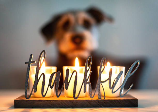 thankful gratitude candles with dog in background - спасибо стоковые фото и изображения