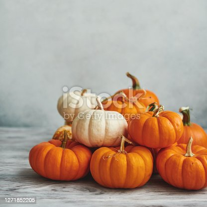Thanksgiving Background for Fall with Pumpkins on Gray