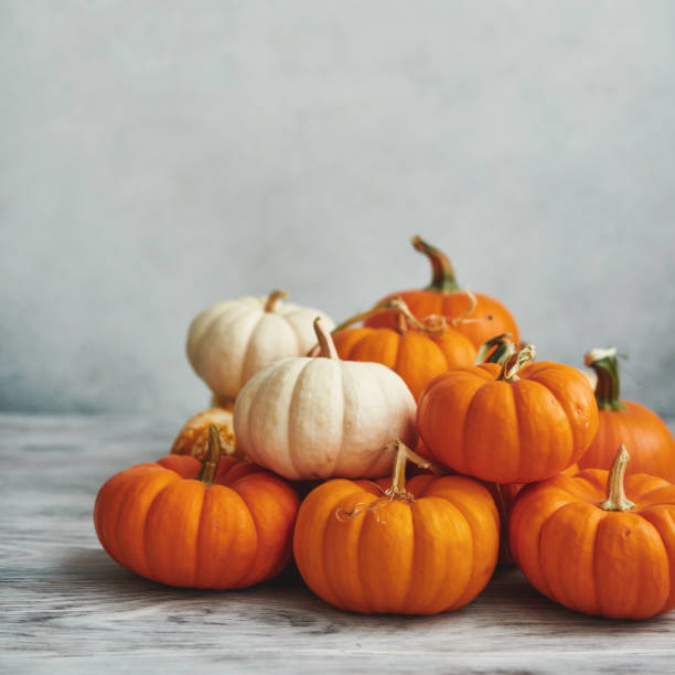Thanksgiving Background for Fall with Pumpkins on Gray stock photo