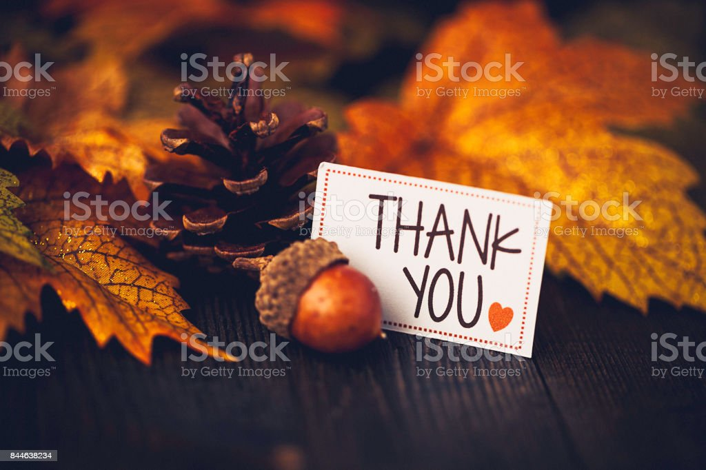 Thanksgiving background with leaves and message stock photo