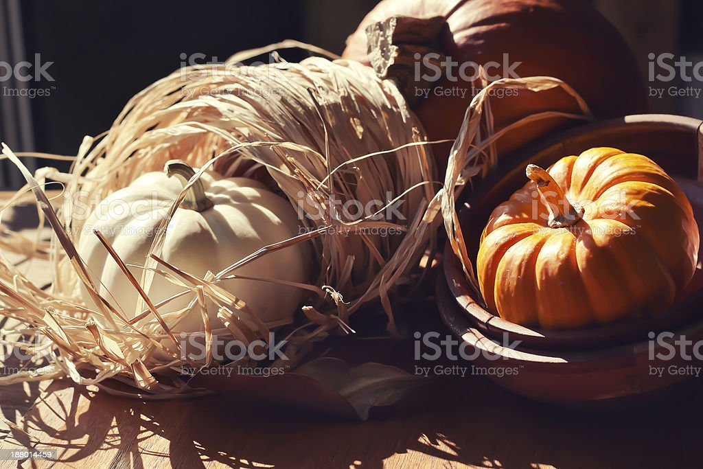 Thanksgiving Background with Pumpkins. stock photo