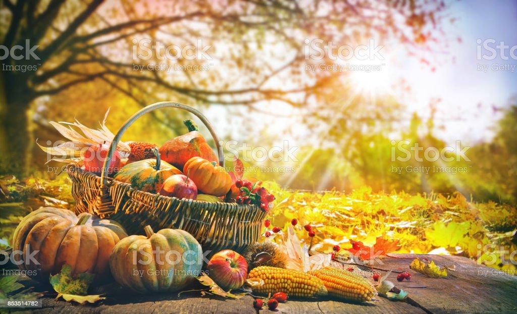 Thanksgiving-Hintergrund mit Kürbissen – Foto