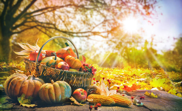 Thanksgiving background with pumpkins stock photo