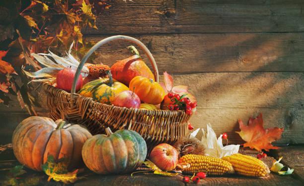 カボチャと感謝祭の背景 - 熟した ストックフォトと画像