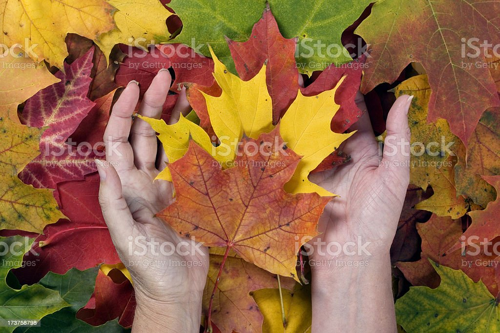 thanksgiving colours royalty-free stock photo