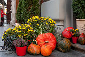 Autumn still life with pumpkins, chrysanthemums and Calluna vulgaris flowers in pots. Decoration near house for Thanksgiving day. Fall Halloween concept on city street