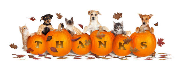 Thanksgiving Dogs and Cats With Falling Leaves Thanksgiving pet web banner banner with leaves and pumpkins with word Thanks carved thanksgiving pets stock pictures, royalty-free photos & images