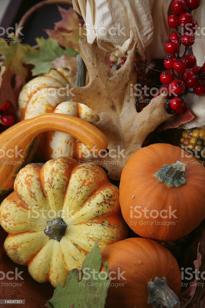 Thanksgiving Fall Harvest royalty-free stock photo
