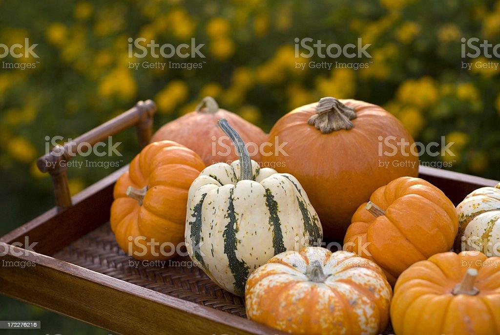 Thanksgiving & Halloween Autumn Gourds & Pumpkins Fall Garden Background royalty-free stock photo