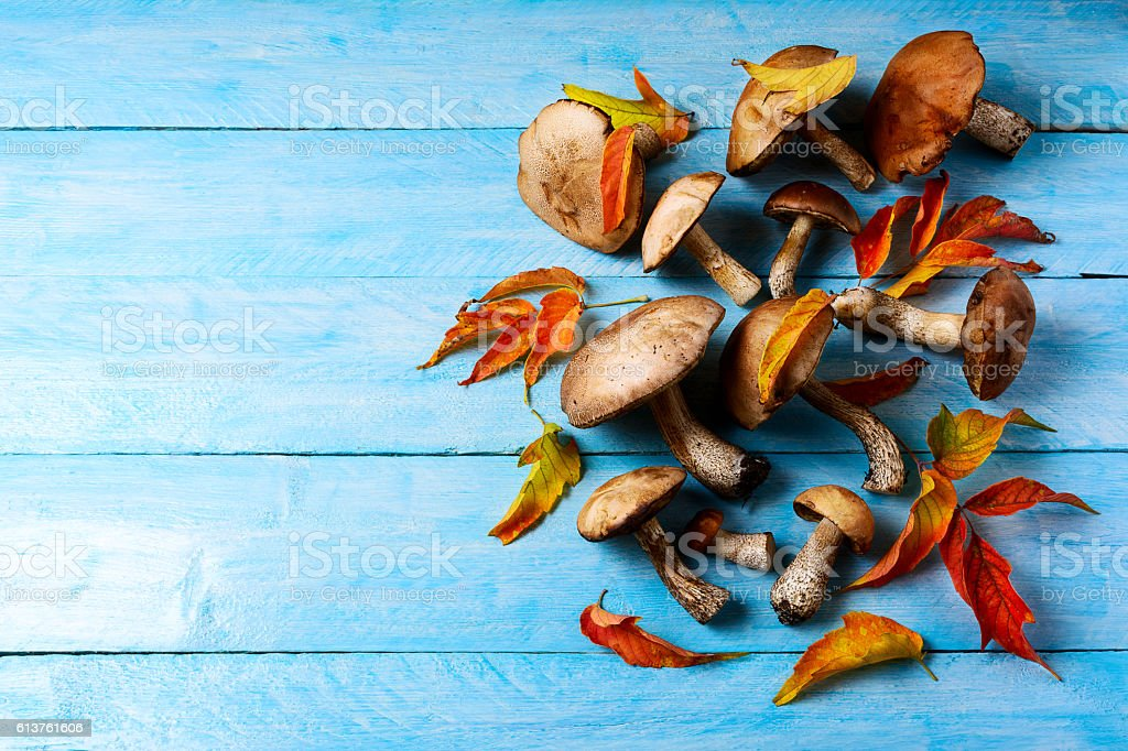 Thanksgiving or fall background with forest mushrooms and fall l stock photo
