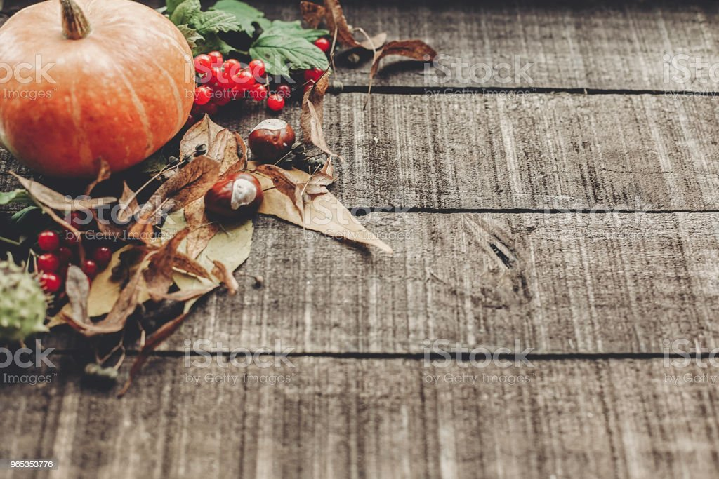 thanksgiving or halloween concept greeting card. beautiful pumpkin with leaves and berries on rustic wooden background, top view. space for text. cozy autumn mood. fall holiday royalty-free stock photo