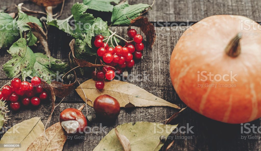 thanksgiving or halloween concept greeting card. beautiful pumpkin with leaves and berries on rustic wooden background, top view. space for text. cozy autumn mood. fall holiday zbiór zdjęć royalty-free