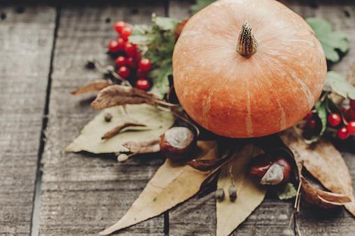 추수 감사절 이나 할로윈 개념 인사말 카드입니다 와 아름 다운 호박 잎과 소박한 나무 배경 평면도에 딸기 텍스트를 위한 공간입니다 아늑한가 분위기입니다 가 휴가 10월에 대한 스톡 사진 및 기타 이미지