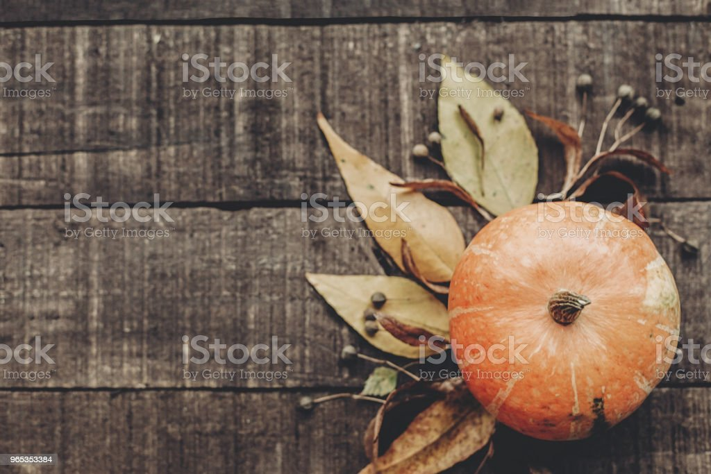 thanksgiving or halloween concept greeting card flat lay. beautiful pumpkin with leaves and berries on rustic wooden background, top view. space for text. cozy autumn mood. fall holiday zbiór zdjęć royalty-free