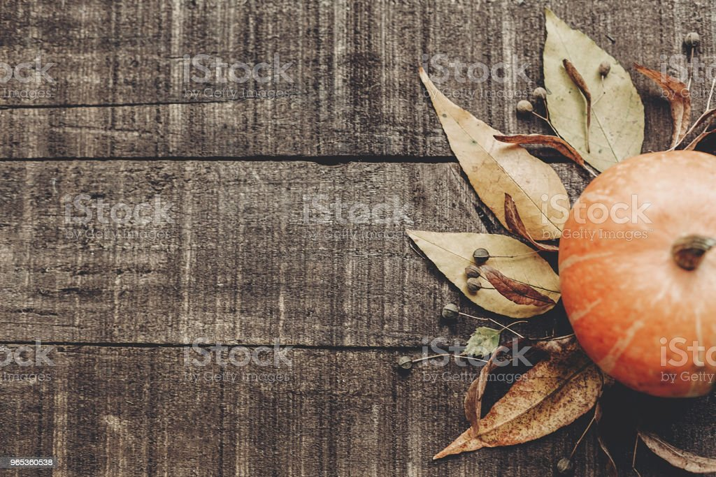 thanksgiving or halloween concept greeting card flat lay. beautiful pumpkin with leaves and berries on rustic wooden background, top view. space for text. cozy autumn mood. fall holiday royalty-free stock photo