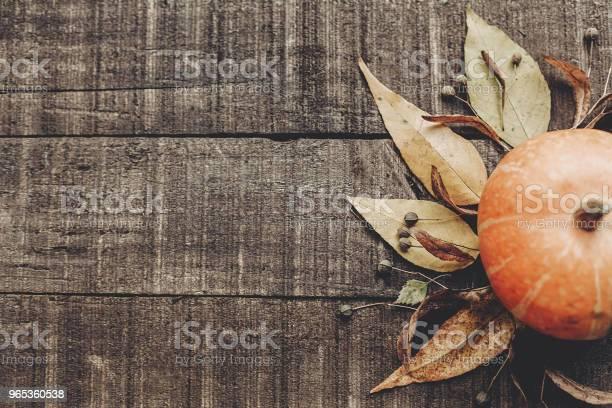 추수 감사절 이나 할로윈 개념 인사말 카드 플랫 하다입니다 와 아름 다운 호박 잎과 소박한 나무 배경 평면도에 딸기 텍스트를 위한 공간입니다 아늑한가 분위기입니다 가 휴가 10월에 대한 스톡 사진 및 기타 이미지