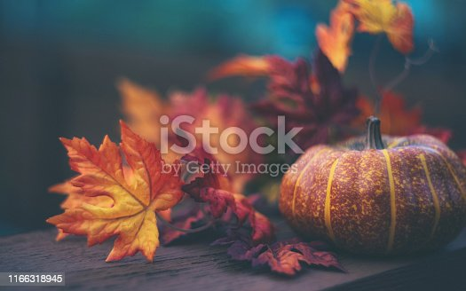 Thanksgiving or Halloween Still Life Arrangement with Pumpkin and Leaves