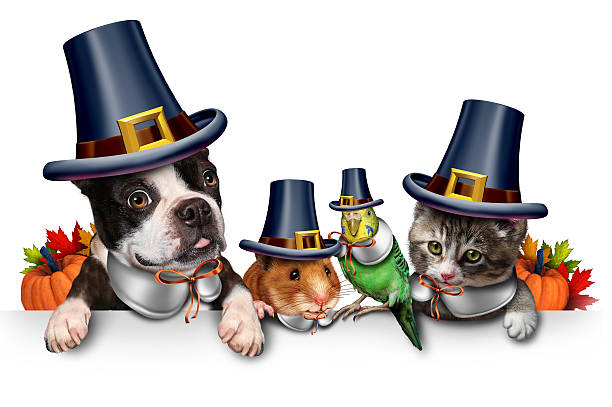Thanksgiving Pet Celebration Thanksgiving pet celebration as a blank sign with a fun cat happy dog cute hamster and budgie each wearing a pilgrim hat head garment as an autumn seasonal symbol for funny pets in costume with 3D illustration elements. thanksgiving pets stock pictures, royalty-free photos & images