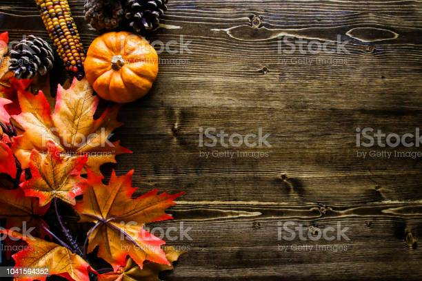 Thanksgiving pumpkin background picture id1041564352?b=1&k=6&m=1041564352&s=612x612&h=wz9m3lzcihjjnfaq7cpczmgkz1veaesltpjkhrrxbag=