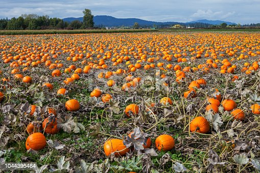 620705960istockphoto Thanksgiving pumpkins 1044395464