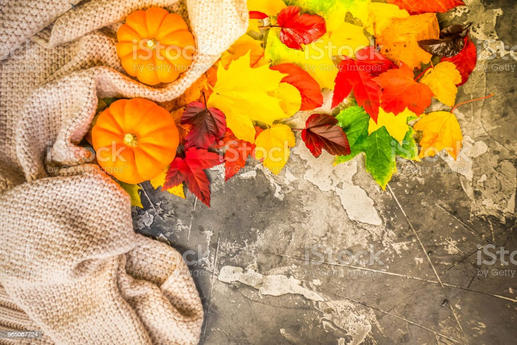 Thanksgiving pumpkins with fall leaves royalty-free stock photo
