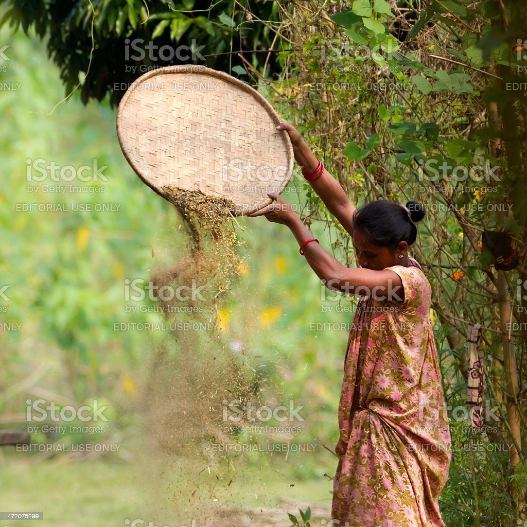 Tharu woman farming in Terai stock photo